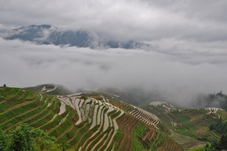 Image for Rice terraces