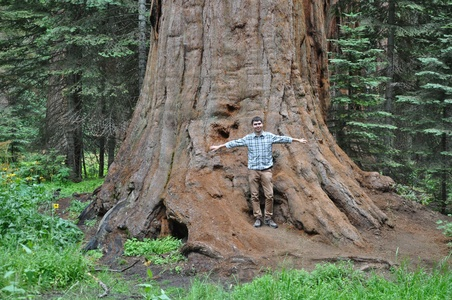 Image for Sequoia park